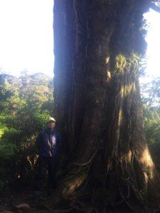 樹齢三千年クラスの杉1